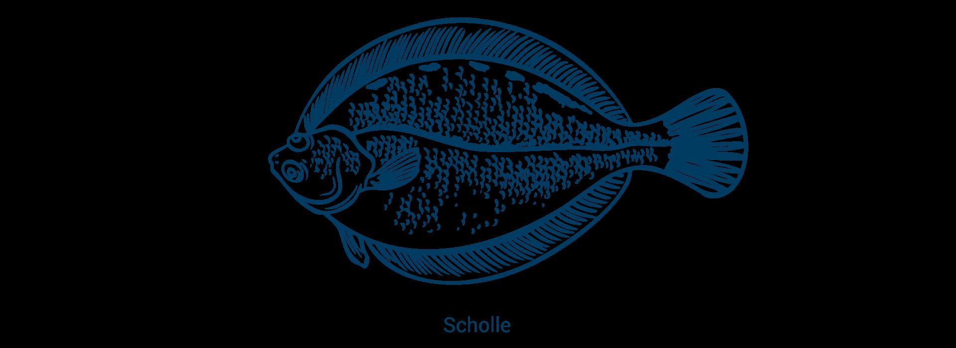 slider_scholle