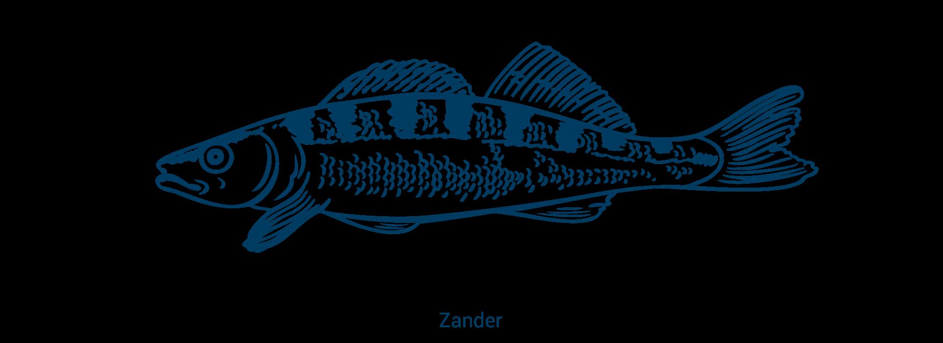 slider_zander